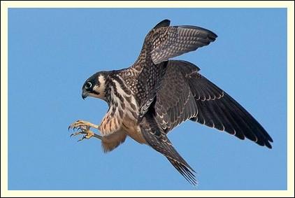 latest birding news from Knutsford England